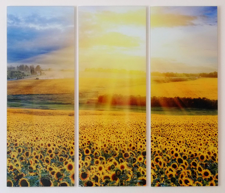 Bild Sonnenblumenfeld Praxisraum Krems
